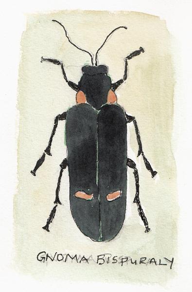 Bug.MV.size.jpg