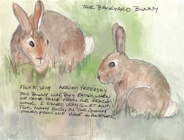 Bunny.size.jpg
