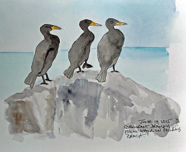 Cormorants.size.jpg