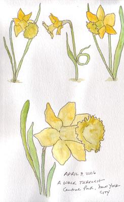 Daffodils.size.jpg