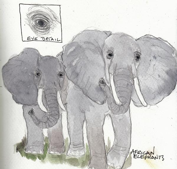 ElephantsSIZE.jpg