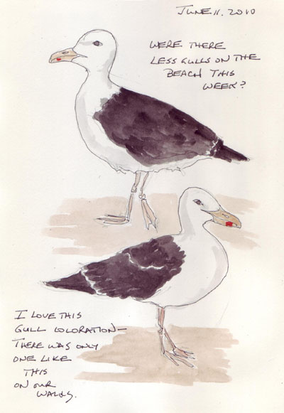 Gulls.6.2010.jpg