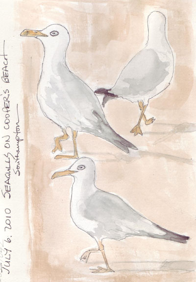 Gulls.Jul6.jpg