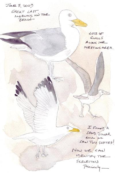 Gulls.crop.jpg