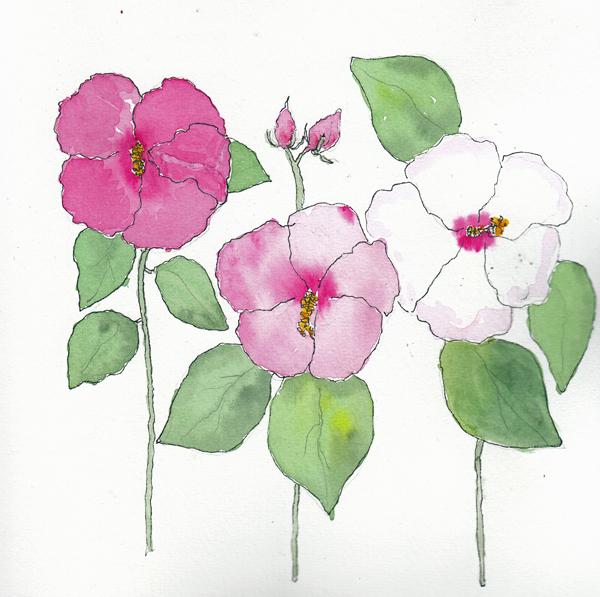 Hibiscus2SIZE.jpg