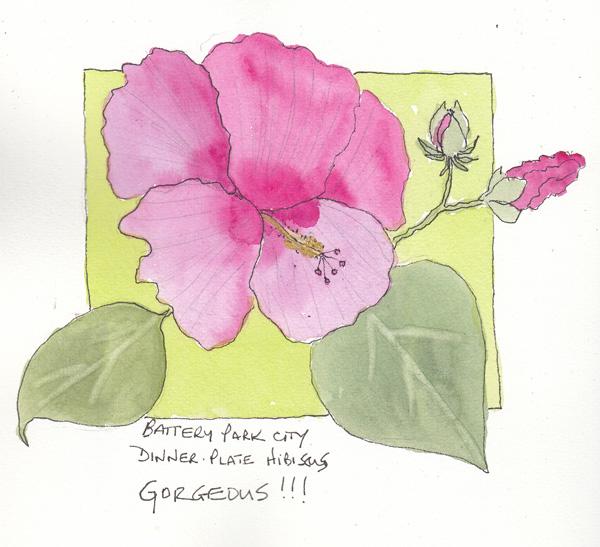 Hibiscus8SIZE.jpg