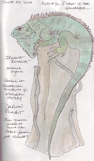 Iguana.size.jpg