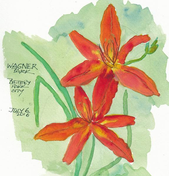 LiliesWagnerParkSIZE.jpg