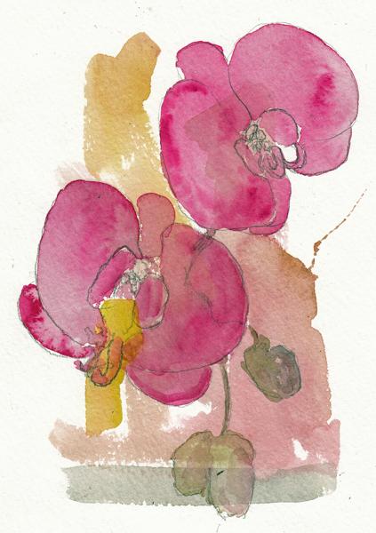 OrchidsSIZE.jpg