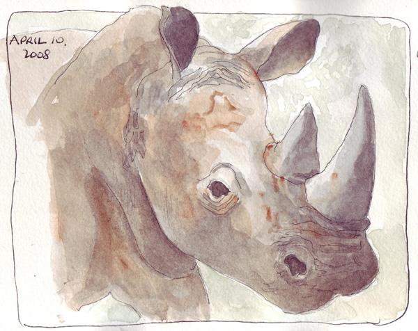 Rhino.scan.jpg
