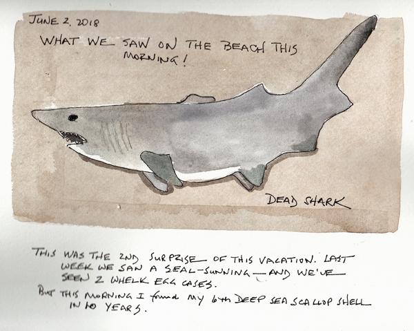 SharkSIZE.jpg