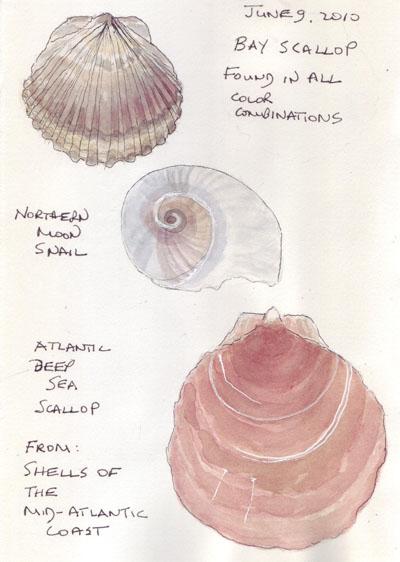 Shells.6.2010.jpg