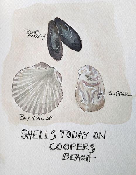 Shells1SIZE.jpg