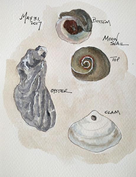 Shells2SIZE.jpg