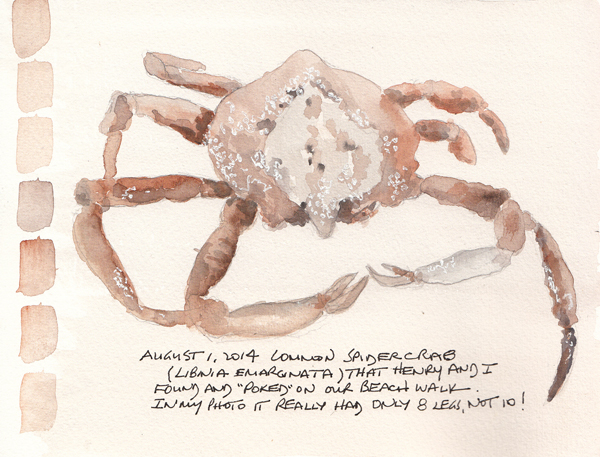 SpiderCrab.size.jpg