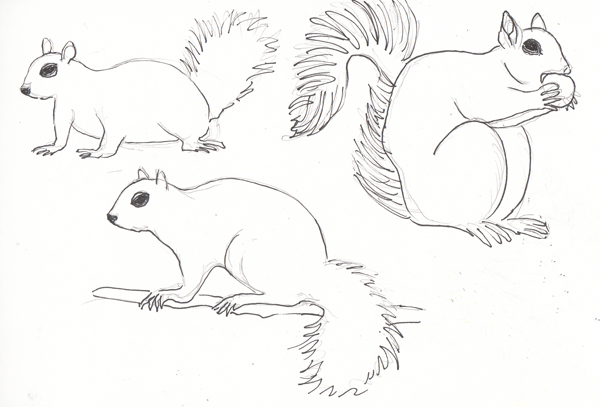 SquirrelsSIZE.jpg