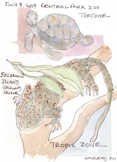 TortoiseSkink.jpg