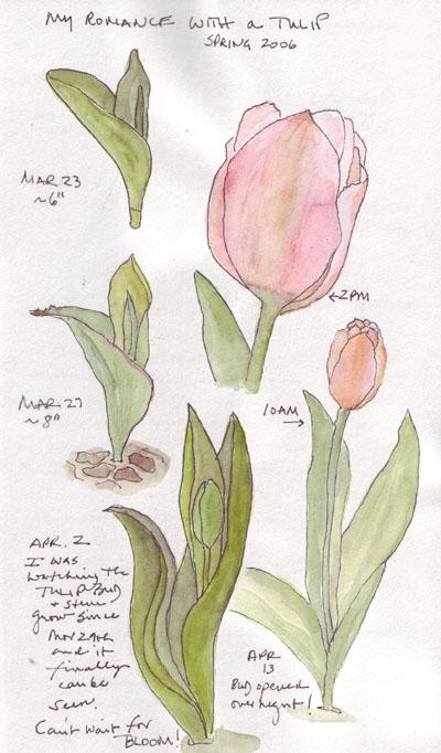 TulipLife.size.jpg
