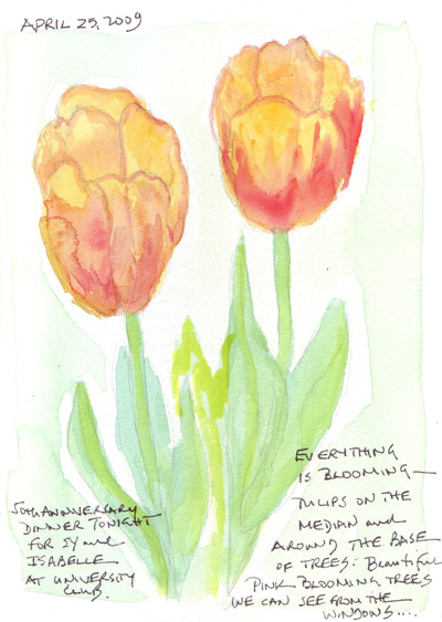 Tulips%20ellow.jpg