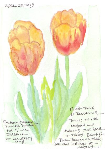 Tulips%20ellow.jpg