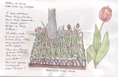 Tulips.planter.size.jpg