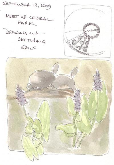 Turtle.Flowers.jpg