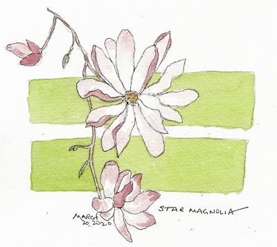 magnoliaSIZE.jpg